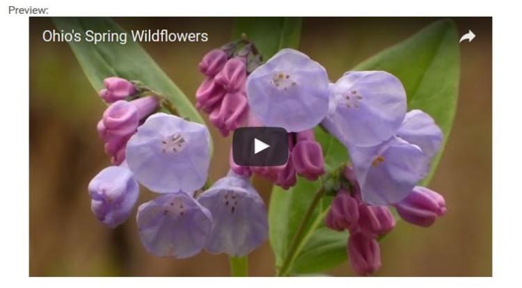 Spring Wilflowers Video