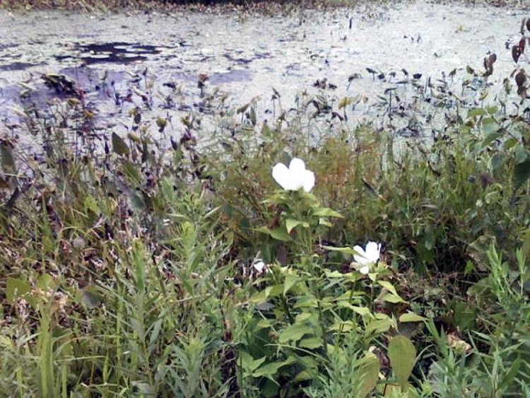 Eyring Wetlands
