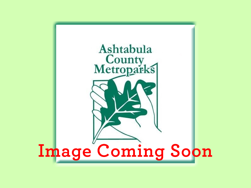 Metroparks Image Coming Soon