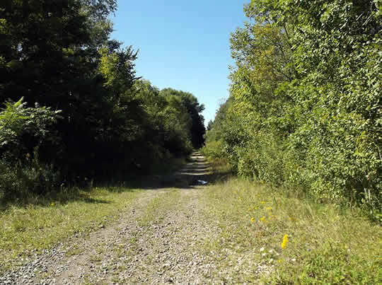 Undeveloped old rail trail through trees
