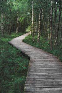 wooden walkway thru woods
