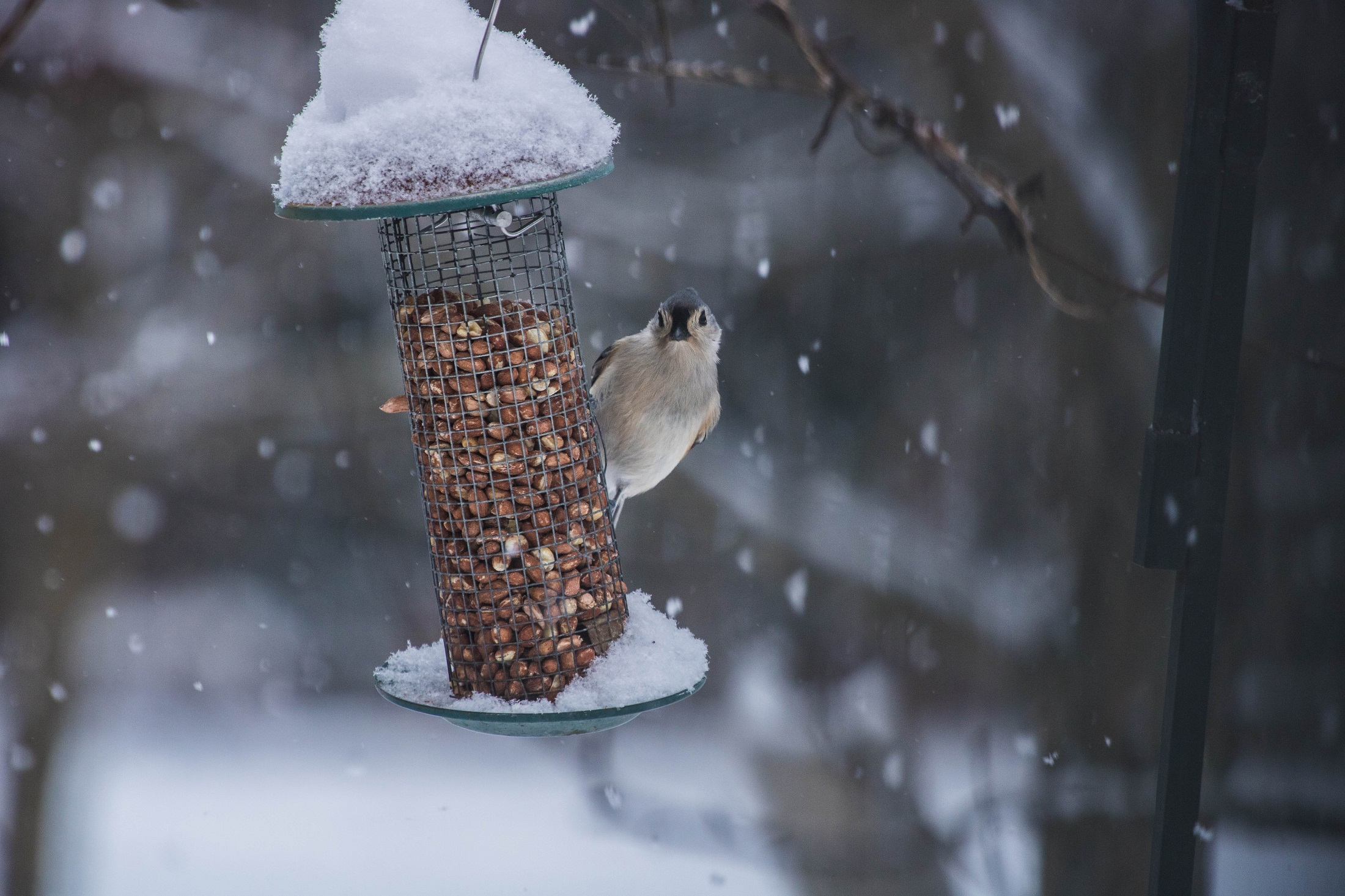 bird at feeder with snow falling